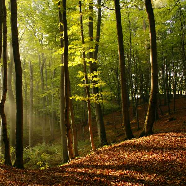Dřevo vlhkost vůně lesa